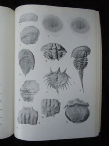 EVOLUTION AND MORPHOLOGY OF THE TRILOBITA, TRILOBITOIDEA AND MEROSTOMATA .FOSSILS AND STRAT 1975.